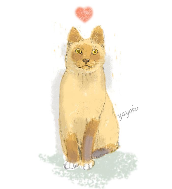 わくわく猫